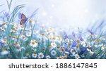 Beautiful Wild Flowers Daisies...
