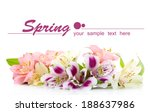 Stock photo alstroemeria flowers isolated on white 188637986