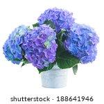 Posy   Of Blue Hortensia...