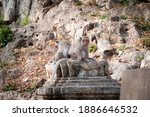 the monkey sitting at the... | Shutterstock . vector #1886646532