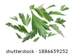 green parsley leaves levitate... | Shutterstock . vector #1886659252
