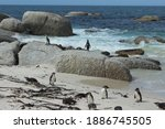 Boulders Beach With Penguin In...