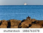 Cormorant In Activity On The...