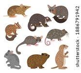 african carnivores animals.... | Shutterstock .eps vector #1886791942
