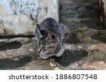 Close Up Gray Tabby Cat Outdoors