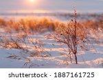 Sunset On Prairie Grasses In...