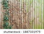 Aged Ivy Hidden Green Wooden...