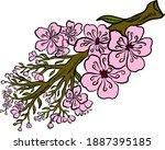 branch of cherry blossom on... | Shutterstock .eps vector #1887395185