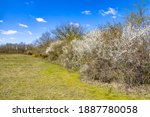 Trees And Bushes In A Windbreak ...