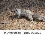 Cute Squirrel In The Yosemite...