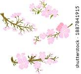 branch of sakura flower vector... | Shutterstock .eps vector #1887841915