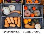 Green And Orange Pumpkins In...