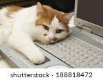 Stock photo notebook computer with cat paw using mouse button 188818472