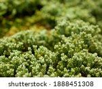 Selective Focus Of Green Fresh...