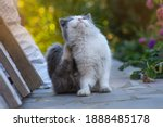 Treatment and prevention of cat ...