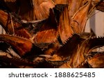 Macro Of A Palm Tree Trunk...