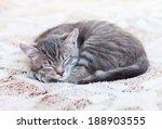 Stock photo beautiful gray sleeping kitty 188903555