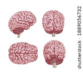 a set of brains in four angles. ... | Shutterstock .eps vector #1889056732