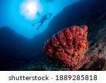 Underwater Photography Of...