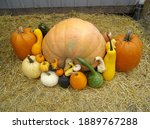 Crates Of Pumkins For Sale At A ...