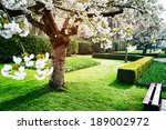 Flowering Cherry Tree In...