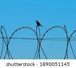 Taiwan Bulbul Bird Perched On...