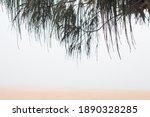 Foggy Morning Ocean Beach...