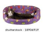 Stock photo grey kitten in his bed 18906919