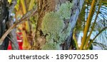 Green Lichen Or Moss On The...
