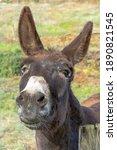 Donkey On A Green Meadow