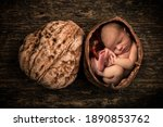 Small photo of Composite image of a newborn baby curled up as a foetus in an open walnut