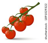 tomatoes on a branch vector.... | Shutterstock .eps vector #1891029322