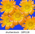 This is a montage of yellow wildflowers against a blue background. - stock photo
