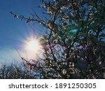 Bright Sun Shining Through The...