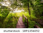 Old Wooden Bridge In Forest And ...