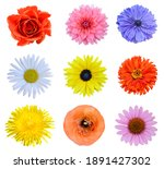 Colorful Botany Flowers...