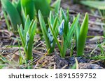 The First Spring Flowers....