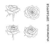 hand drawn black and white rose.... | Shutterstock .eps vector #1891669918
