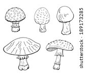 Mushrooms On White Background....