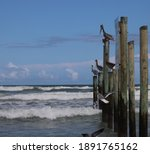 Pelican Birds Perched On Wood...