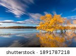 Autumn Trees In The Lake
