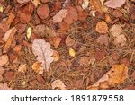 Fall Brown Lying Leaves And...