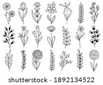 collection forest fern... | Shutterstock .eps vector #1892134522