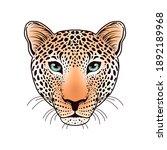 leopard muzzle on white... | Shutterstock .eps vector #1892189968