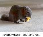 Little Cute Squirrel Eating...