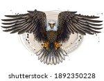The Eagle. Flying Bald Eagle. ...