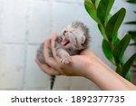 Blind Little Kitten On The...