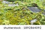 Blur Bokeh Background  Green...