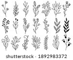 collection forest fern... | Shutterstock .eps vector #1892983372