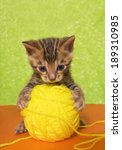 Stock photo cute bengal kitten on colorful orange and green background with ball of yellow yarn 189310985